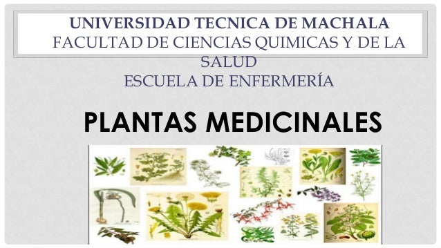 Plantas medicinales y sus efectos en el ser power for Plantas ornamentales y medicinales