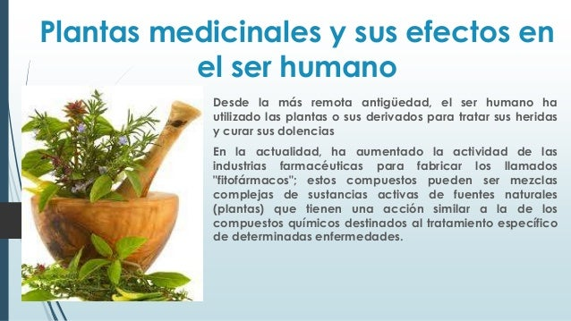 Plantas medicinales y sus efectos en el ser power