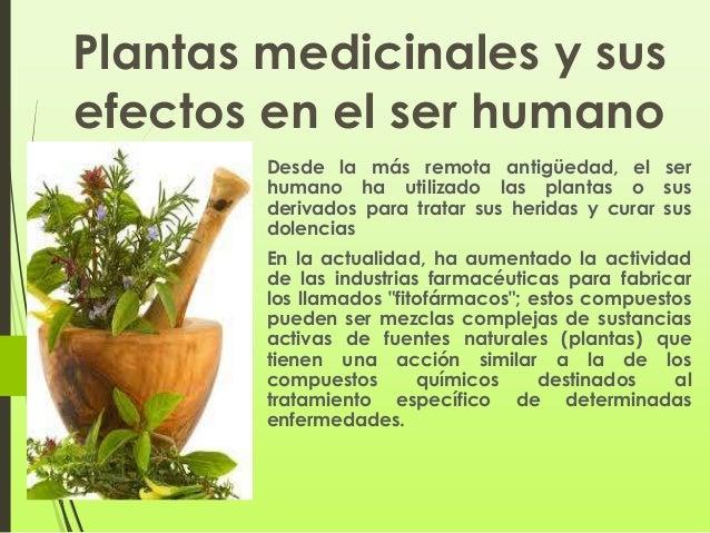 Plantas medicinales y sus efectos en el ser power for Mezclas de plantas medicinales