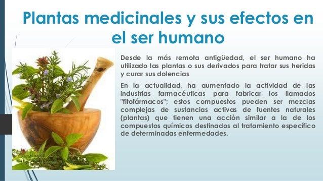 Plantas medicinales y sus efectos en el ser power for Para q sirven las plantas ornamentales