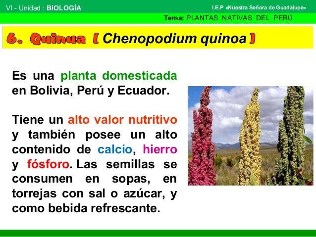 plantas nativas del per