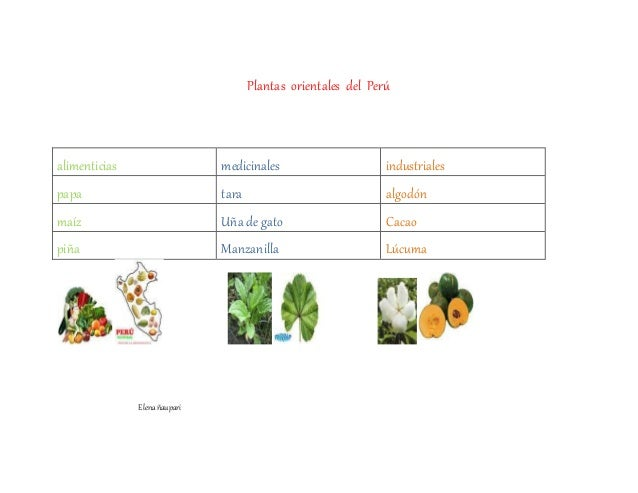 Plantas orientales del Perú alimenticias medicinales industriales papa tara algodón maíz Uña de gato Cacao piña Manzanilla...