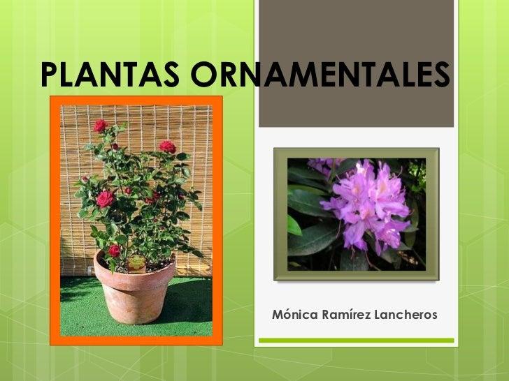 PLANTAS ORNAMENTALES           Mónica Ramírez Lancheros