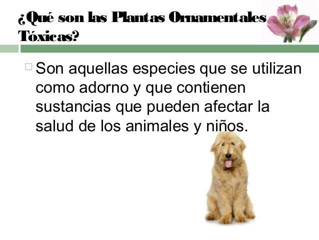 plantas ornamentales t xicas en peque os animales