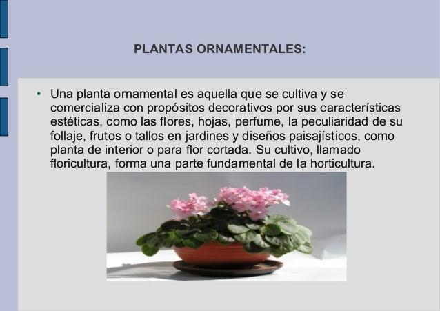 Plantas ornamentales for Una planta ornamental
