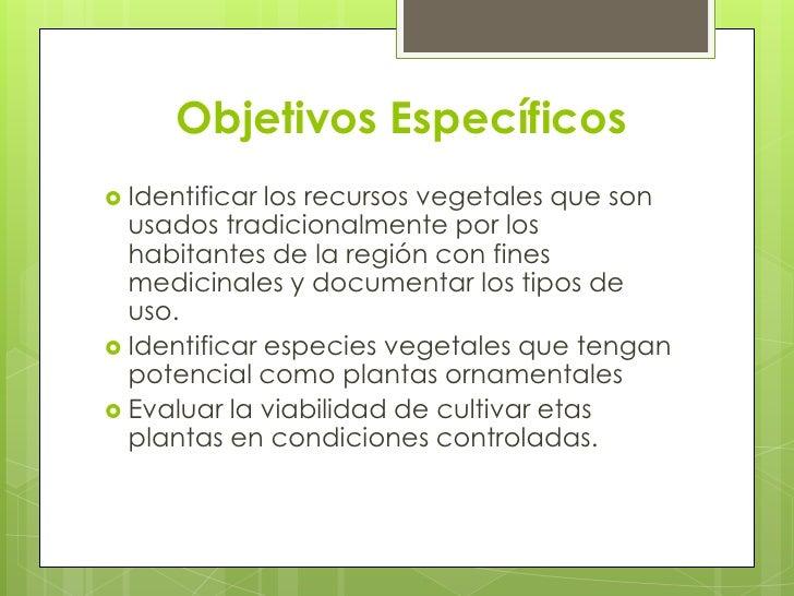 Plantas ornamentales for Especies de plantas ornamentales