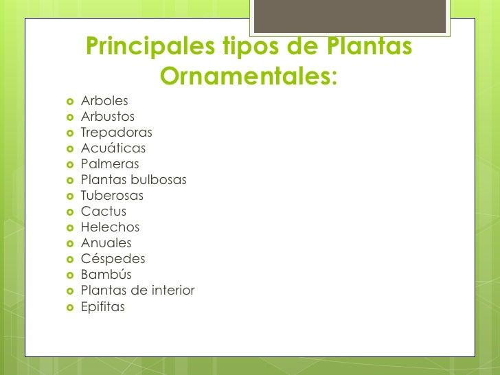 Plantas ornamentales monica for Concepto de plantas ornamentales