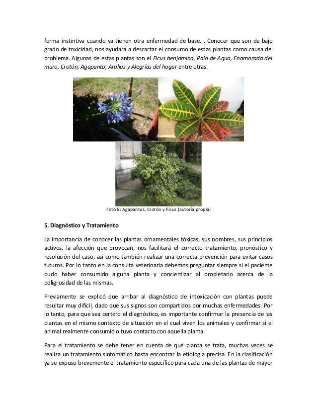 Plantas ornamentales toxicas for Algunas plantas ornamentales