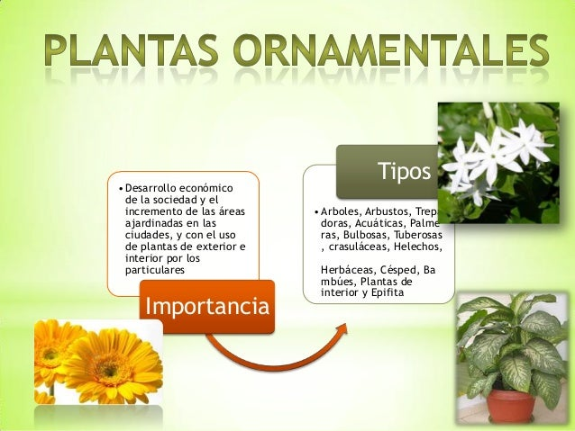 Plantas ornamentales y xerofilas for Concepto de plantas ornamentales