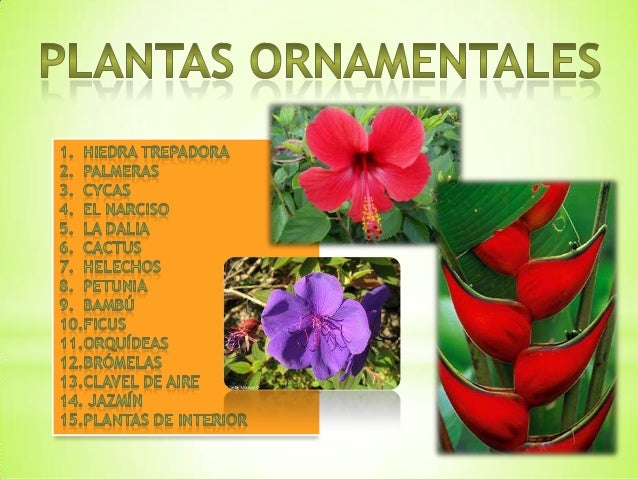 Tipos De Plantas Ornamentales Y Sus Caracteristicas