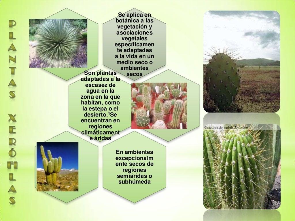 Plantas ornamentales y xerofilas for 2 plantas ornamentales