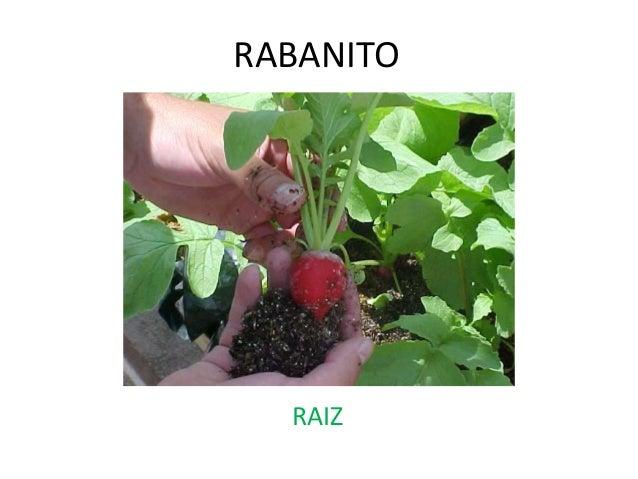 Plantas que se comen 1 for Que se planta en septiembre
