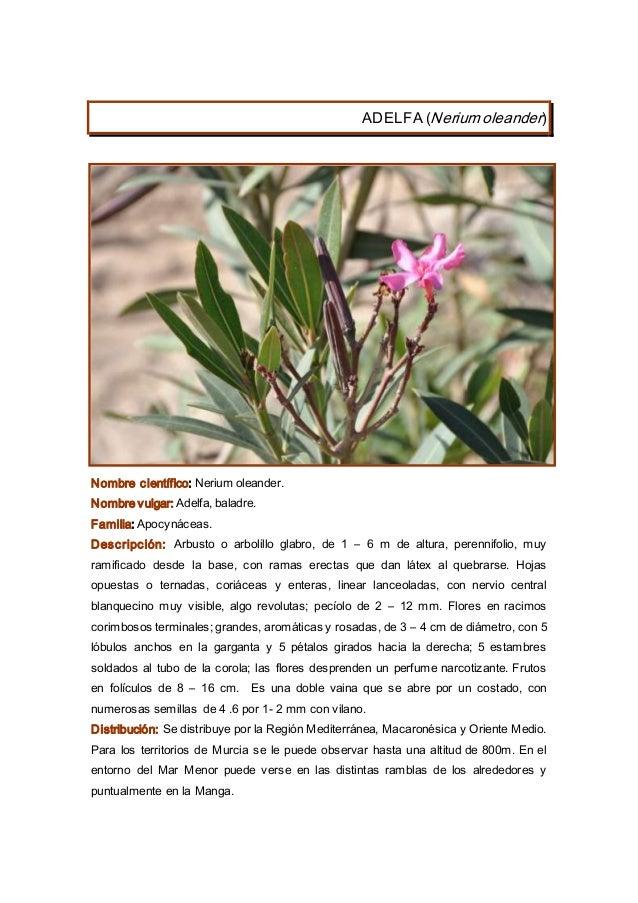 Plantas region de murcia 2014 for Pececillo nuevo de cualquier especie