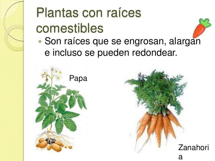 Plantas según su uso 3