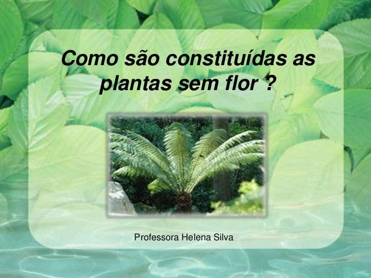 Como são constituídas as   plantas sem flor ?       Professora Helena Silva