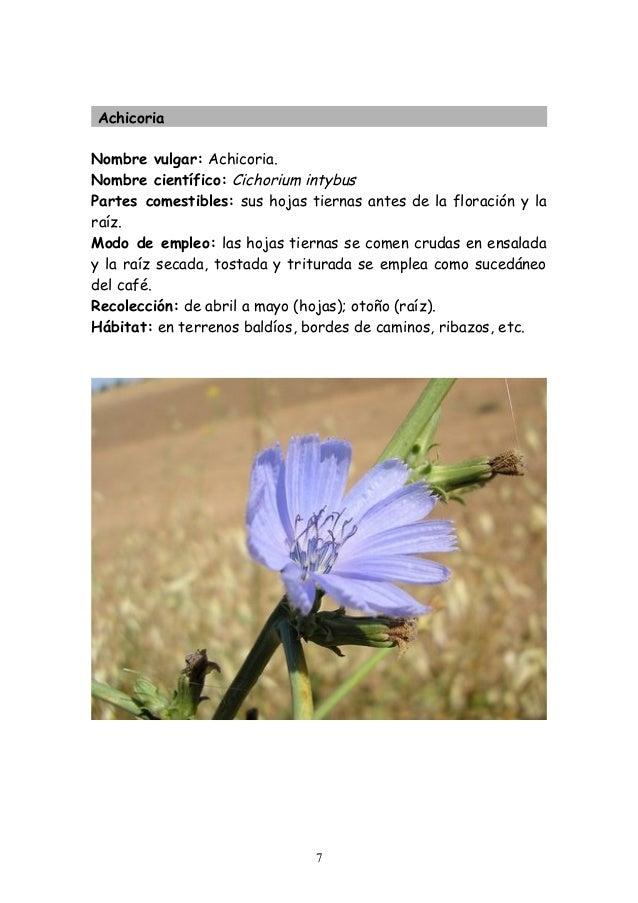 Plantas silvestres comestibles - Tipos de flores silvestres ...
