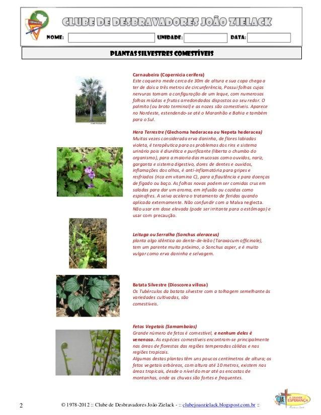 Plantas silvestres comestíveis