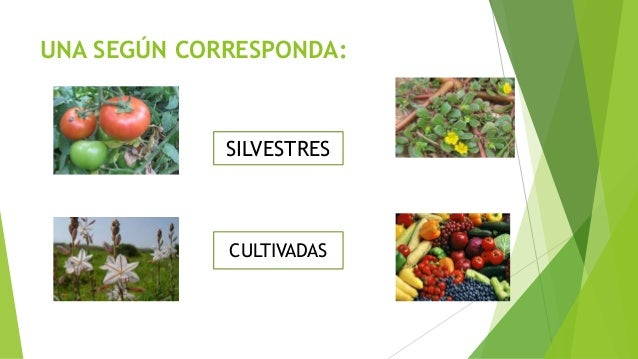 Plantas silvestres y cultivadas