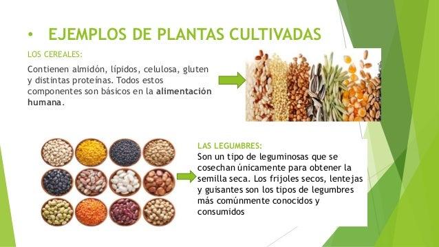 Plantas silvestres y cultivadas for Que son plantas ornamentales ejemplos