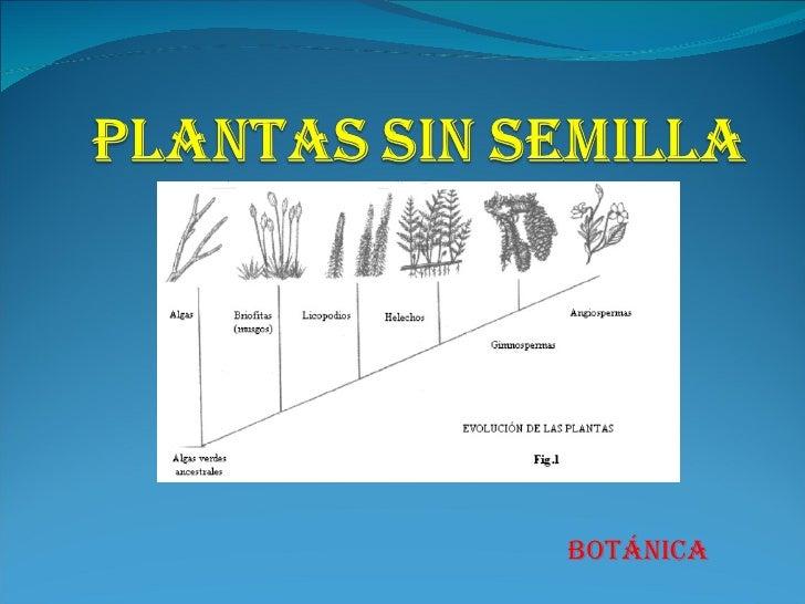 Plantas sin semilla 1