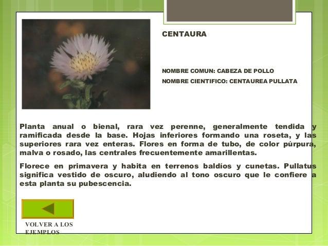 Plantas superiores reproduccion asexual de las plantas