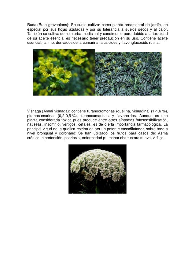Plantas toxicologicas for Planta ornamental toxica