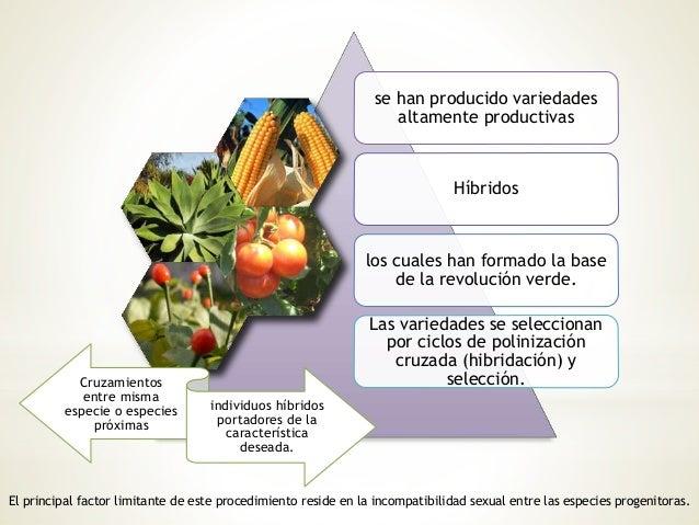 Plantas transg nicas for Incompatibilidad en plantas