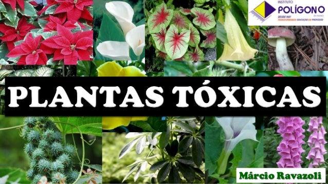 Plantas T Xicas