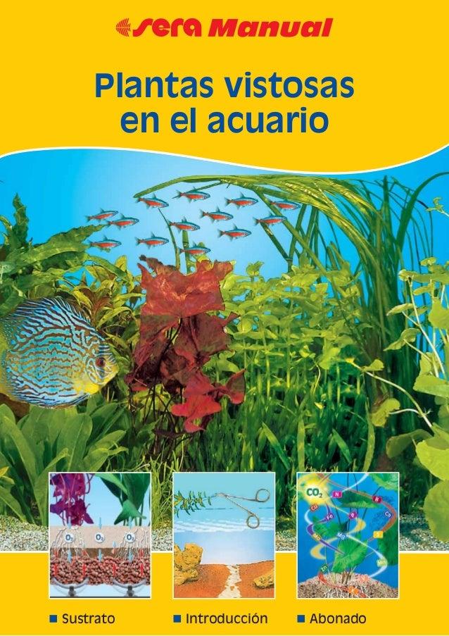 Plantas vistosas en el acuario for Plantas de acuario