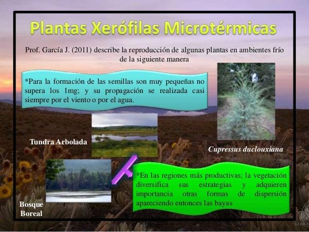 Plantas xer filas microt rmicas - Plantas que aguantan temperaturas extremas ...