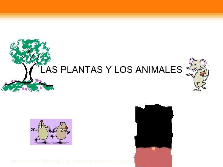 LAS PLANTAS Y LOS ANIMALES