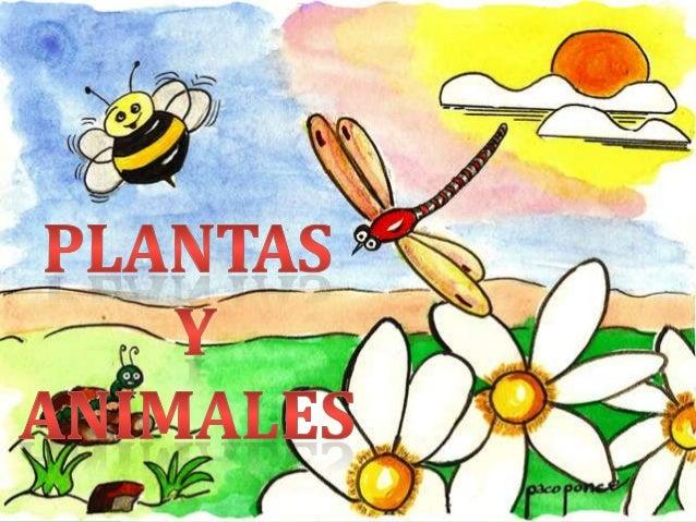PRECENTACION DE PLANTAS Y ANIMALES