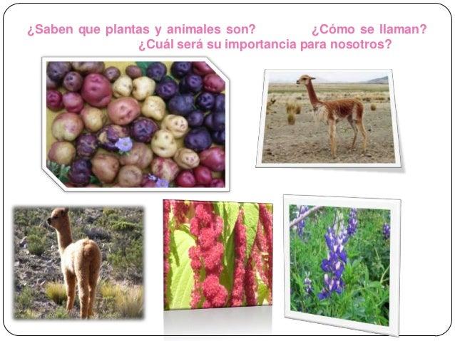 Plantas y animales nativos del Per