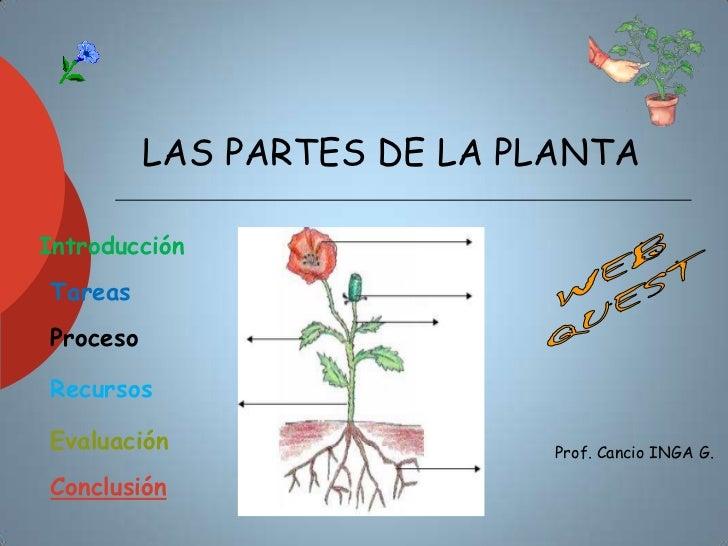 LAS PARTES DE LA PLANTAIntroducciónTareasProcesoRecursosEvaluación                   Prof. Cancio INGA G.Conclusión