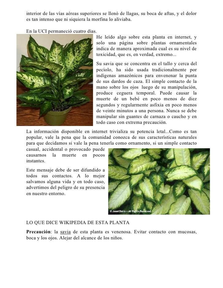 Plantas decorativas de interior venenosas interiorhalloween co - Plantas venenosas de interior ...
