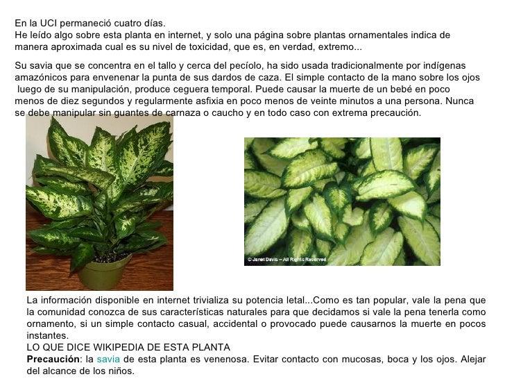 Planta venenosa camila casa hogar for Planta venenosa decorativa