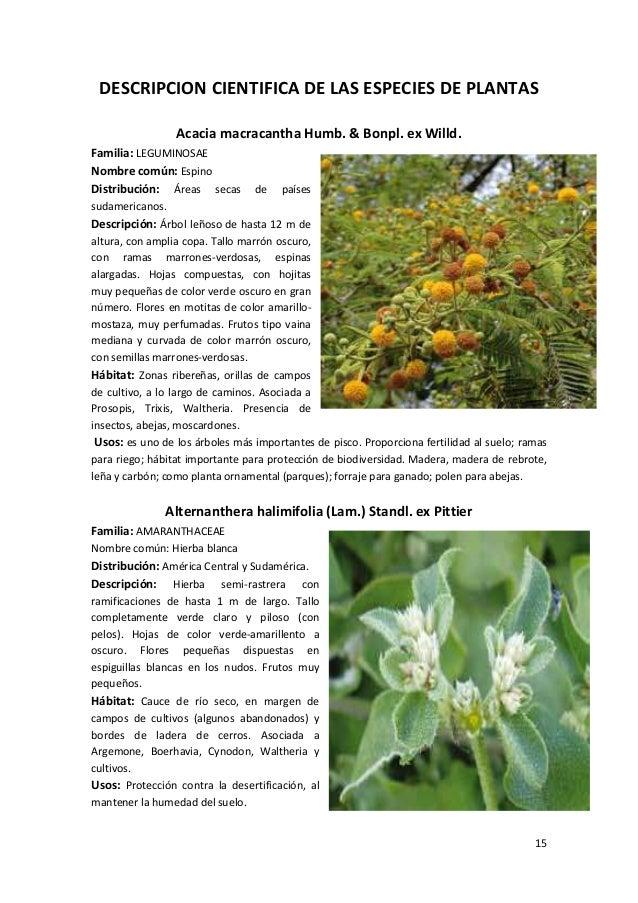 plantas y vegetaci n del ri pisco peru