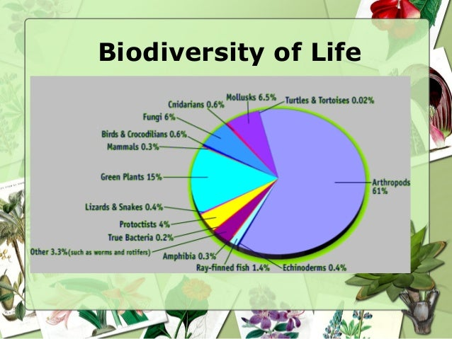Image result for biodiversity