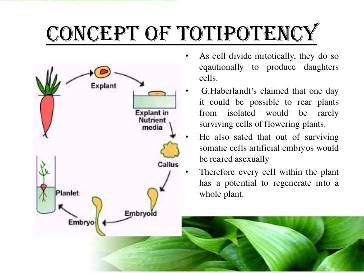 Plant Biotechnology Introduction