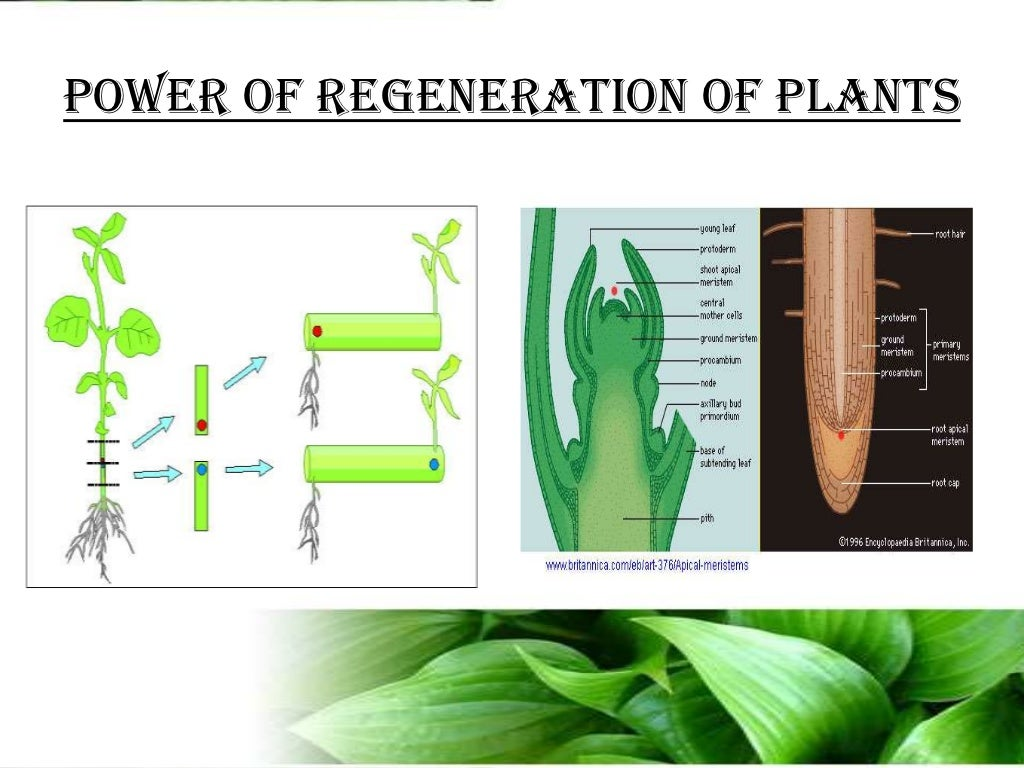 what is plant science and biotechnology all about