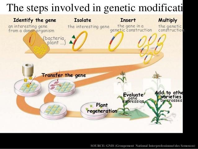 steps involved in plant breeding