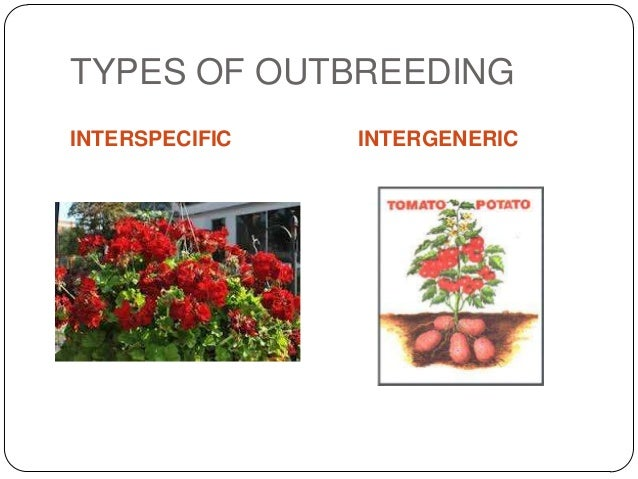 TYPES OF OUTBREEDINGINTERSPECIFIC   INTERGENERIC
