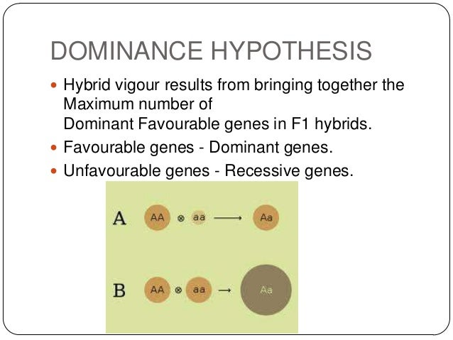DOMINANCE HYPOTHESIS Hybrid vigour results from bringing together the  Maximum number of  Dominant Favourable genes in F1...