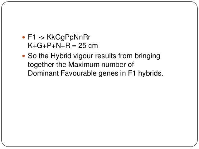  F1 -> KkGgPpNnRr  K+G+P+N+R = 25 cm So the Hybrid vigour results from bringing  together the Maximum number of  Dominan...