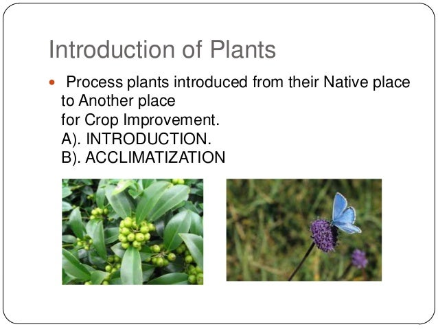 Introduction of Plants Process plants introduced from their Native place to Another place for Crop Improvement. A). INTRO...
