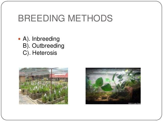 BREEDING METHODS A). Inbreeding B). Outbreeding C). Heterosis