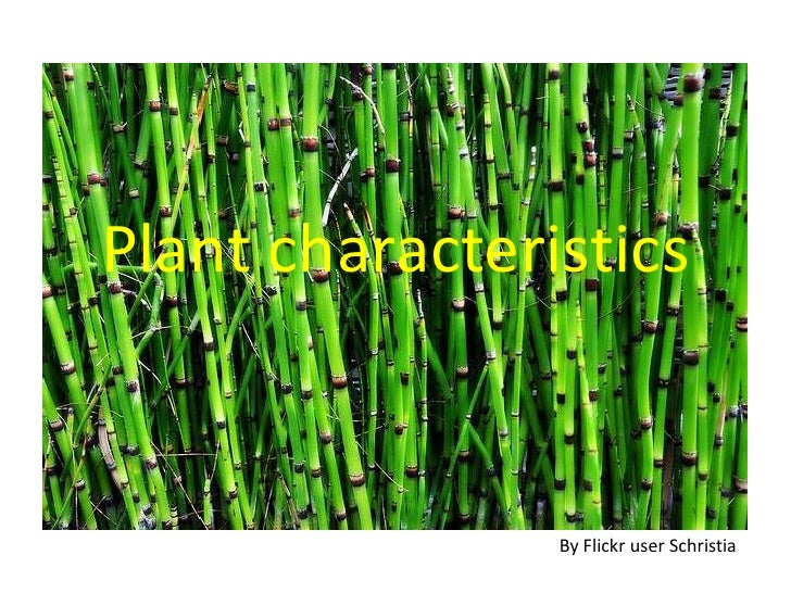 Plant characteristics<br />By Flickr user Schristia<br />