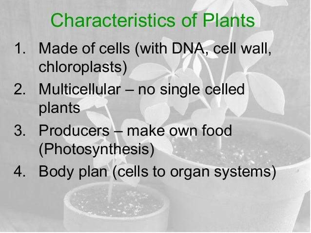 characteristics of plants Unit 1 characteristics and classification of living organisms welcome to the exciting and  look at the sky, the soil, trees, plants, people, log in registration.