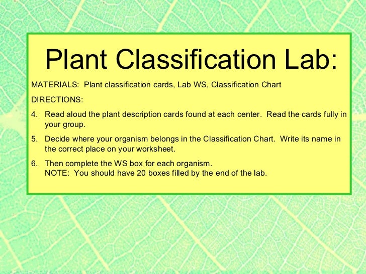 Plant classification LAB students categorize plants based on physic – Plant Classification Worksheet