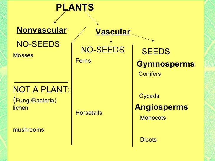 Plant classification LAB students categorize plants based on physic – Plant Classification Worksheet